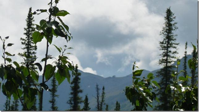 Alaska July 8 11 Dempster Hwy (28)