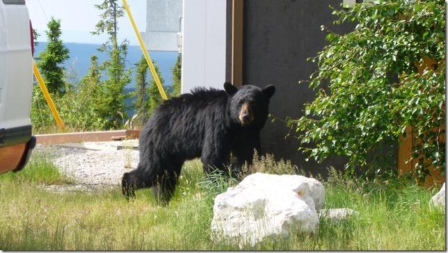 Alaska July 8 11 Dempster Hwy (2)