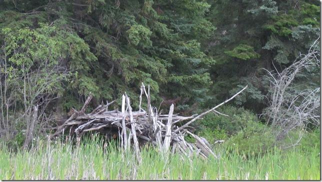 Aug 9 11 canoe (20)