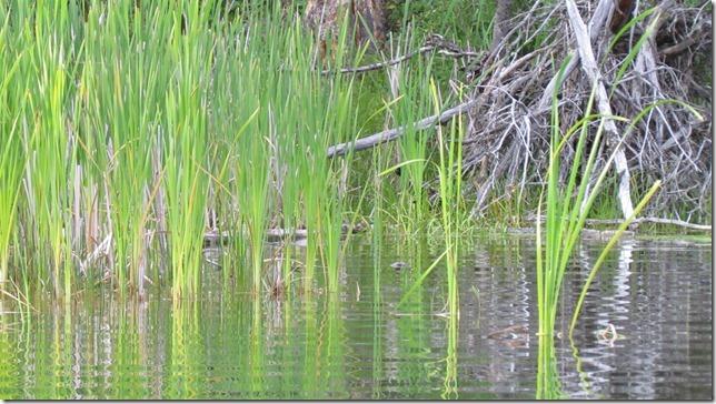 Aug 9 11 canoe (22)
