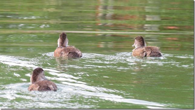 Aug 9 11 canoe (25)