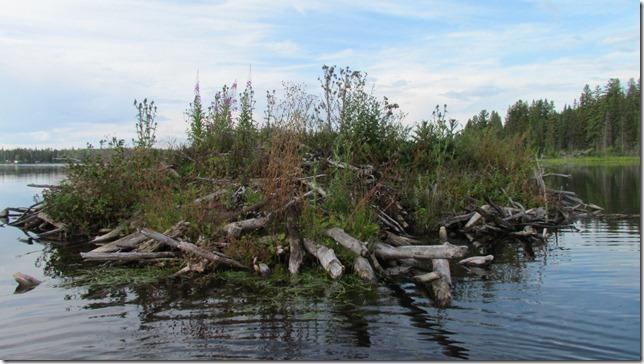 Aug 9 11 canoe (9)