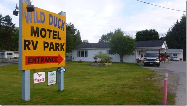 Wild Duck (6)