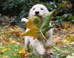 puppy leaf