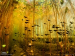 Tadpoles, Canada  Photograph by Eiko Jones