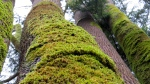 BC moss