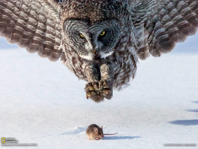 Owl & the Mouse
