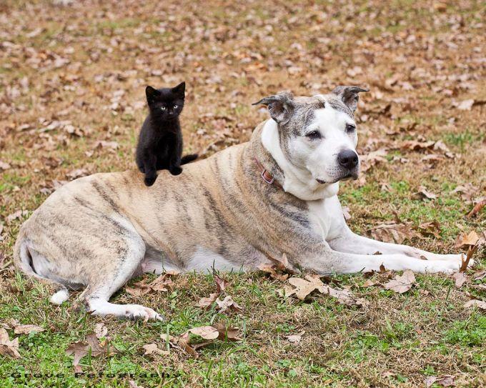 7. Friends, Sierra the best dog in the whole wide world