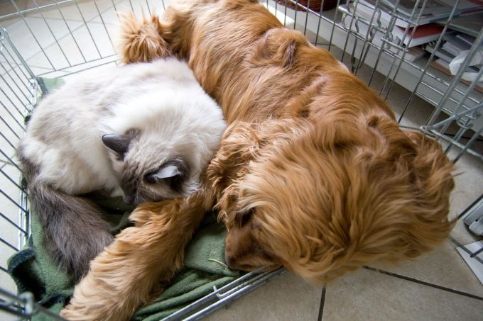 30. Dordrecht-sleeping together