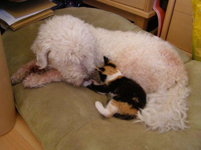 38. Cat & dog