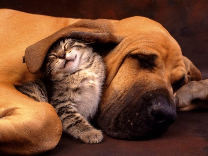 23. Cat and Dog