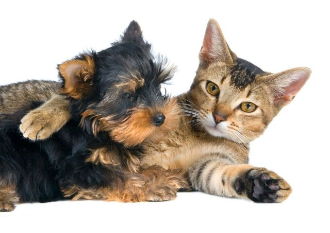 34. The puppy and kitten