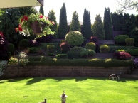Cruizer loving my backyard