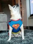 Xanderman the Superdog