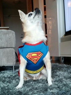 Xanderman the Superdog